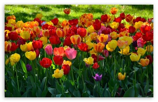 flores-wallpaper-ipad