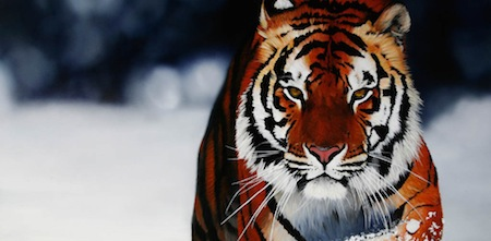 wallpapers-animales-1
