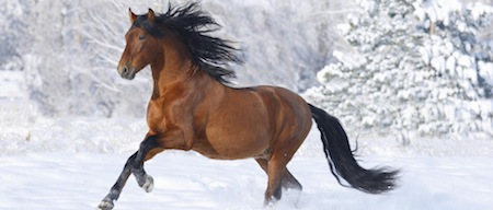 wallpapers-animales-caballo-nieve