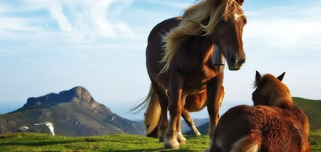 wallpapers-animales-caballos