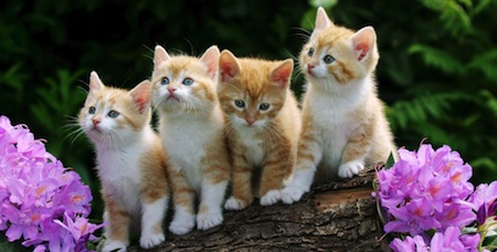 wallpapers-animales-gatitos