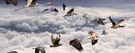 wallpapers-animales-pajaros-volando