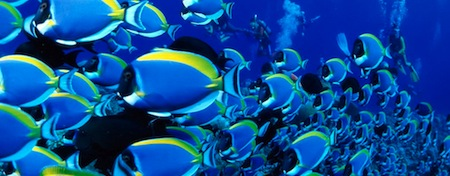 wallpapers-animales-peces