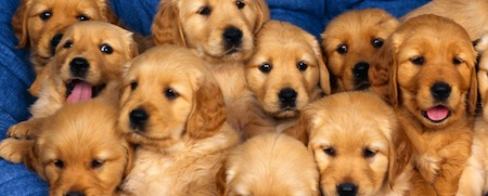 wallpapers-animales-perros-cachorros
