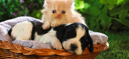 wallpapers-animales-perros-gatos