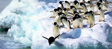 wallpapers-animales-pinguinos